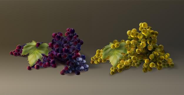 Wektor kiść winogron białych i czerwonych. świeże owoce jesienią na białym tle