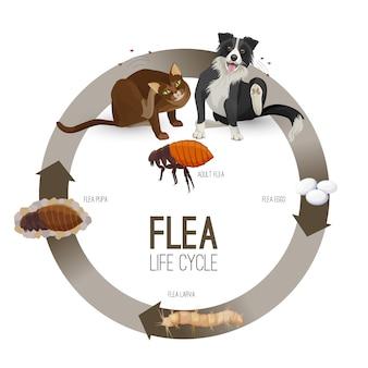 Wektor koło cyklu życia pcheł