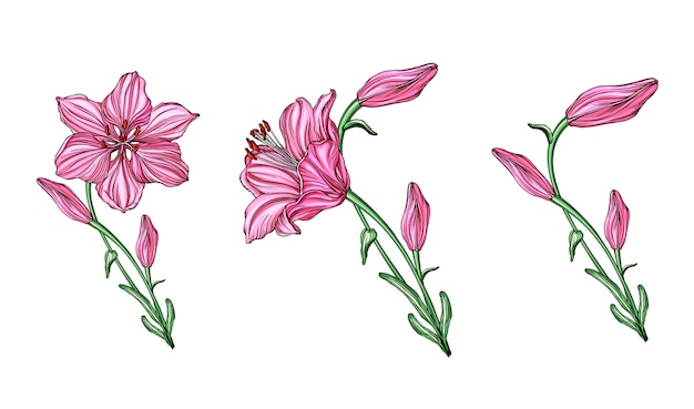 Wektor kompozycje kwiatowe z kwiatów lilii.