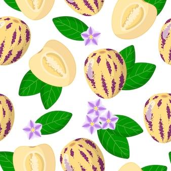 Wektor kreskówka wzór z solanum muricatum lub egzotyczne owoce pepino, kwiaty i liście na białym tle