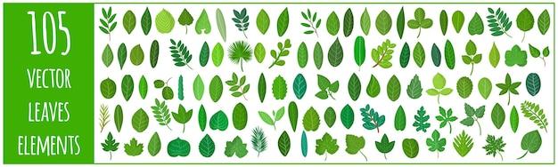 Wektor kreskówka zestaw ilustracji z różnymi zielonymi liśćmi roślin i drzew na białym tle