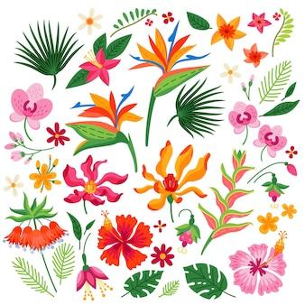 Wektor kreskówka zestaw tropikalnych kwiatów na białym tle