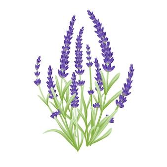 Wektor kwiatów lawendy
