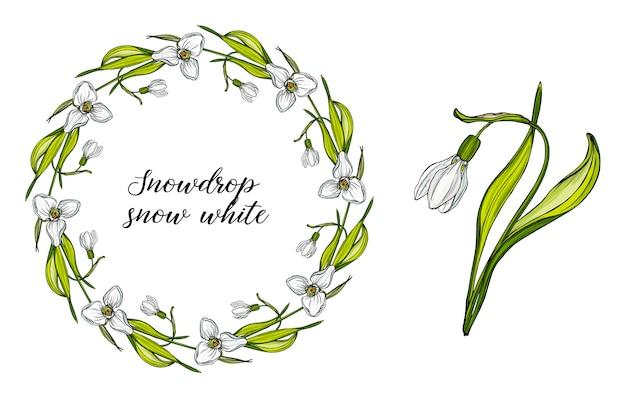 Wektor kwiatowy zestaw z kwiatami przebiśniegi