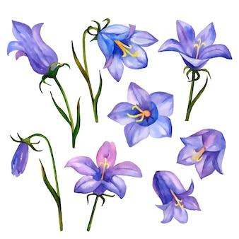 Wektor kwiaty bluebell na białym tle na białym tle