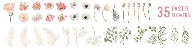 Wektor kwiaty i liście, suszony anemon, róże ślubne, trawa pampasowa, zieleń eukaliptusa. akwarela pastelowe elementy kwiatowy design. zestaw ilustracji na białym tle kwiaty