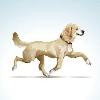 Wektor labrador retriever pies