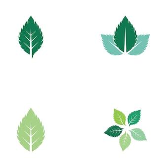 Wektor logo świeżej natury liści mięty