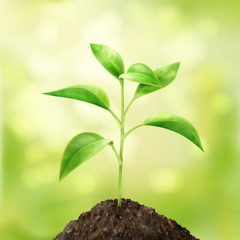 Wektor mały zielony kiełkować w glebie z tłem bokeh