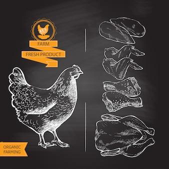 Wektor mięsa kurczaka