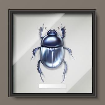 Wektor oprawione ciemny niebieski błyszczący chrząszcz gnojowy wiszący na ścianie