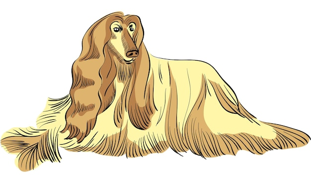 Wektor pies rasy chart afgański kolor