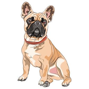 Wektor płowy pies rasy buldog francuski siedzi, najczęstsza kolorystyka