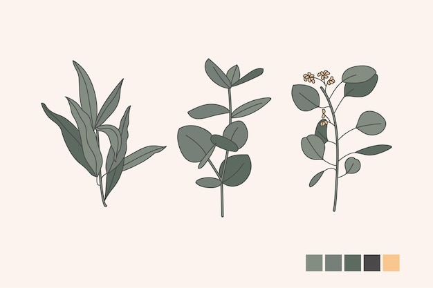 Wektor pozdrowienie kolekcji ikon różnych gałęzi eukaliptusa z liśćmi. elementy wystroju botanicznego.