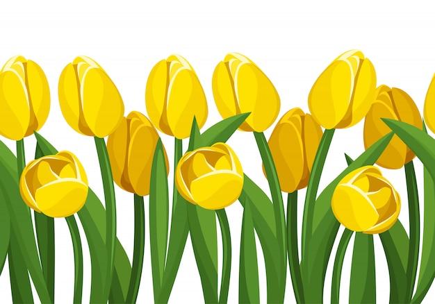 Wektor poziomej granicy bez szwu z żółte tulipany i zielone liście na białym tle.