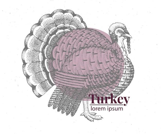 Wektor ręcznie rysowane ilustracja turcja.