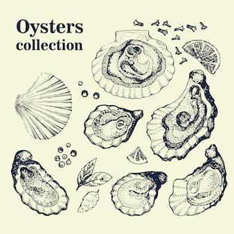 Wektor ręcznie rysowane zbiór ostryg. vintage ilustracje