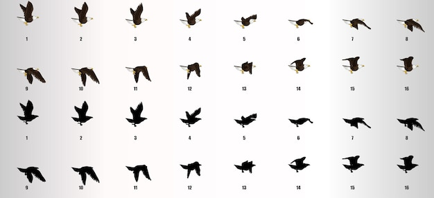 Wektor sekwencji animacji cyklu latania orła