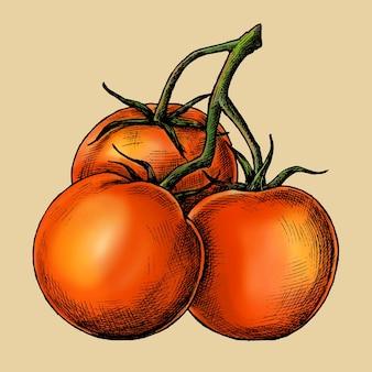 Wektor świeżych organicznych dojrzałych pomidorów