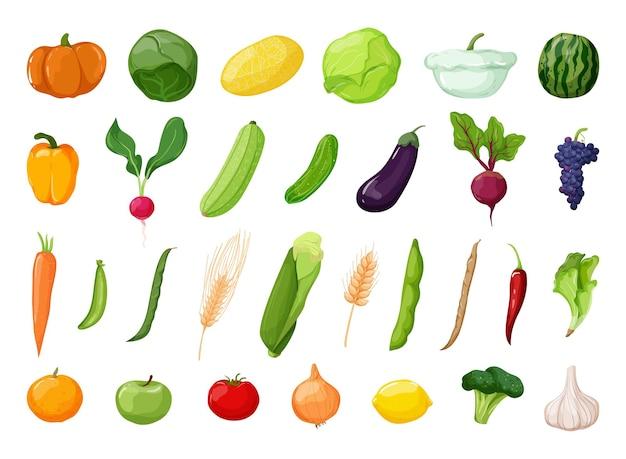 Wektor szczegółowe warzywa i owoce