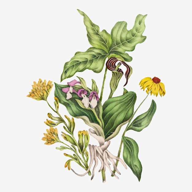 Wektor szkarłatnego malowanego kubka, efektownego storczyka, indyjskiej rzepy i bukietu kwiatów kukurydzy