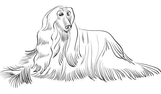 Wektor szkic psa rasy chart afgański leżącego