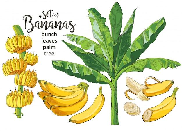 Wektor tropikalnych bananów palmowych textural bezszwowy wzór.