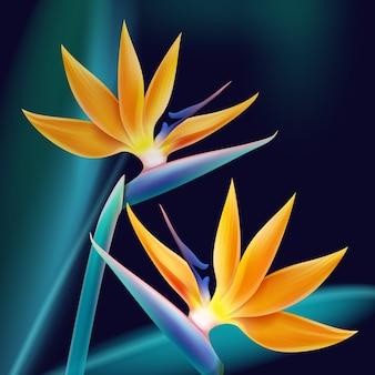 Wektor tropikalnych roślin bird of paradise lub strelitzia reginae na białym tle na ciemnoniebieskie tło rozmycie