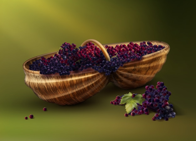 Wektor wiklinowy bascket ze świeżo zebranych czerwonych winogron do wina na białym tle na zielonym tle