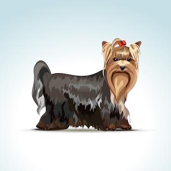 Wektor yorkshire terrier pies