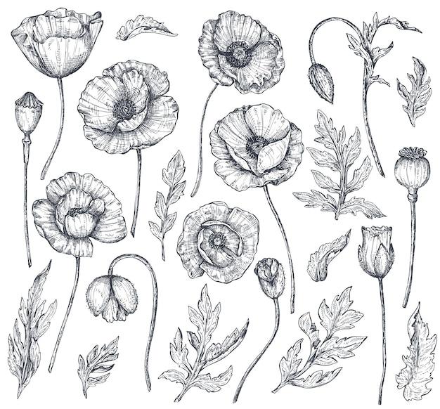 Wektor zbiory ręcznie rysowane kwiaty maku, pąki i liście w stylu szkic na białym tle. piękne elementy kwiatowe do projektowania wiosennego lub kolorowanka.