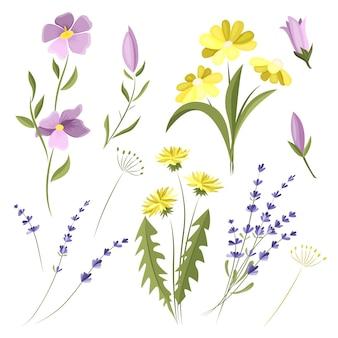 Wektor zestaw dzikich kwiatów. elementy wystroju. kwiaty polne.