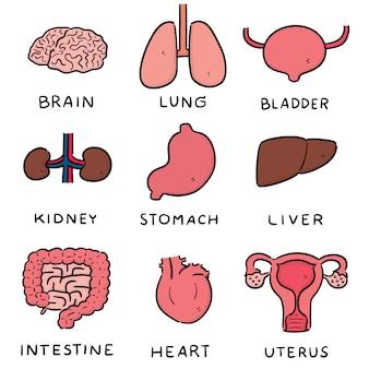 Wektor zestaw kreskówka narządów wewnętrznych