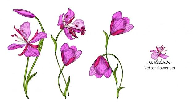 Wektor zestaw kwiatów, różowe delikatne kwiaty