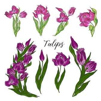 Wektor zestaw kwiatów tulipanów