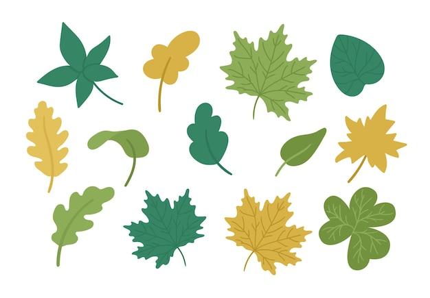 Wektor zestaw ładny jesiennych liści. jesienna kolekcja zieleni. opadający klon, dąb, liść kasztanowca