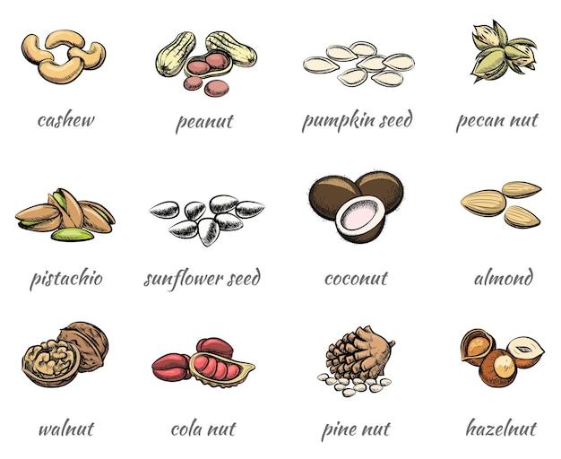 Wektor zestaw orzechów. jedzenie orzeszki ziemne i orzechy laskowe, nasiona i orzechy włoskie, migdały i pistacje