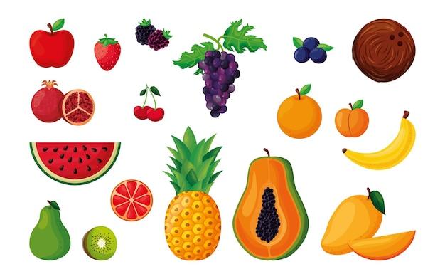 Wektor zestaw owoców