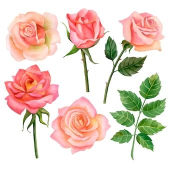 Wektor zestaw róż i liści ilustracja kwiatowy na białym tle
