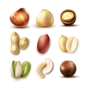 Wektor zestaw różnych orzechów: całe i pół orzechów laskowych, makadamia, pistacje, orzeszki ziemne, orzechy nerkowca, widok z boku na białym tle