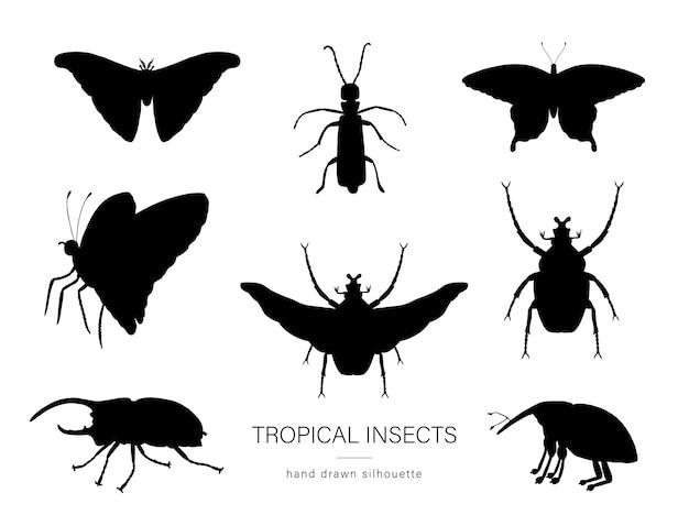 Wektor zestaw tropikalnych owadów.