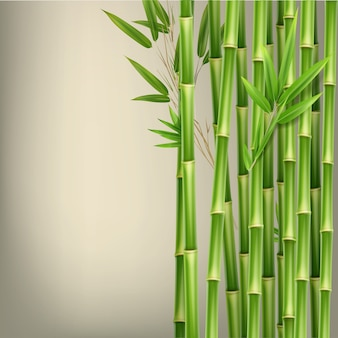 Wektor zielony bambus łodygi i liście na białym tle na beżowym tle z miejsca na kopię