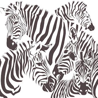 Wektor zwierzęcia zebry