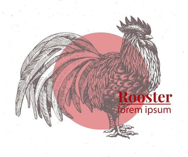 Wektorowa ręka rysująca kurczak ilustracja.