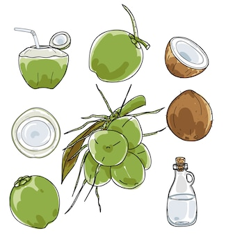 Wektorowa ręka rysujący kokosowy wektorowy ustalony rysunek.