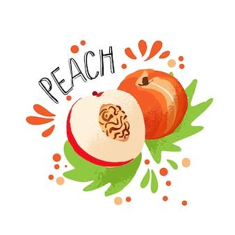 Wektorowa ręka rysuje barwioną świeżą brzoskwini ilustrację z miąższem i owocową kością i zielonymi liśćmi.