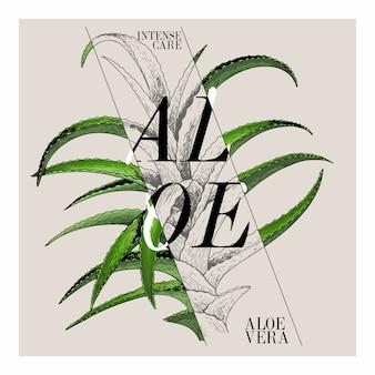 Wektorowy aloesu vera kosmetyczny etykietkowy projekt.