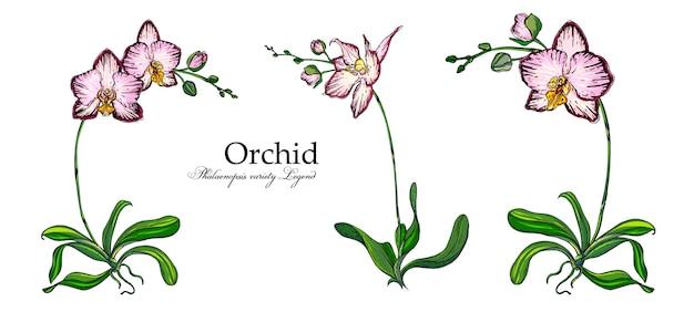 Wektorowy jaskrawy kwiatu przygotowania orchidee