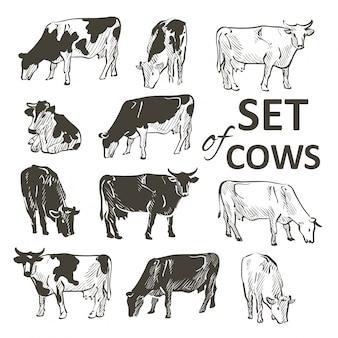 Wektorowy ustawiający krowy