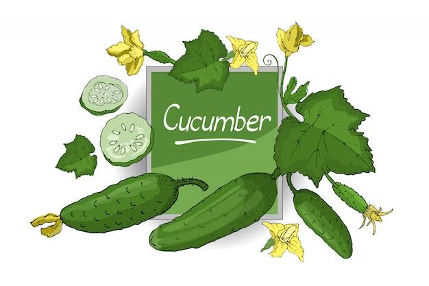 Wektorowy ustawiający z zielonym świeżym ogórkiem. pojedyncze ogórki z łodygami, liśćmi, żółtymi kwiatami, całe i krojone. letnie zbiory.